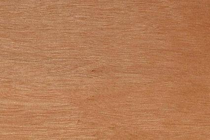 Блэкбат (или шаровидный эвкалипт) – крупная австралийская лиственная порода дерева